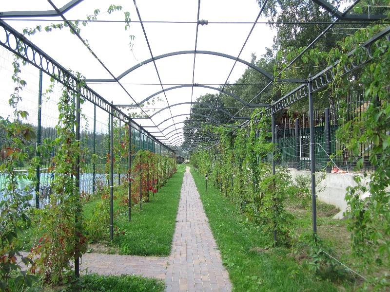 берсо дорожка из клинкера виноград девичий весна веледниково