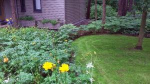 болшой лесной участок цветник газон купальница теневой папоротник заречье