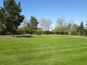 большой участок жуковка газон аллейные посадки лип живая изгородь из туи сосна обыкновенная весна цветники