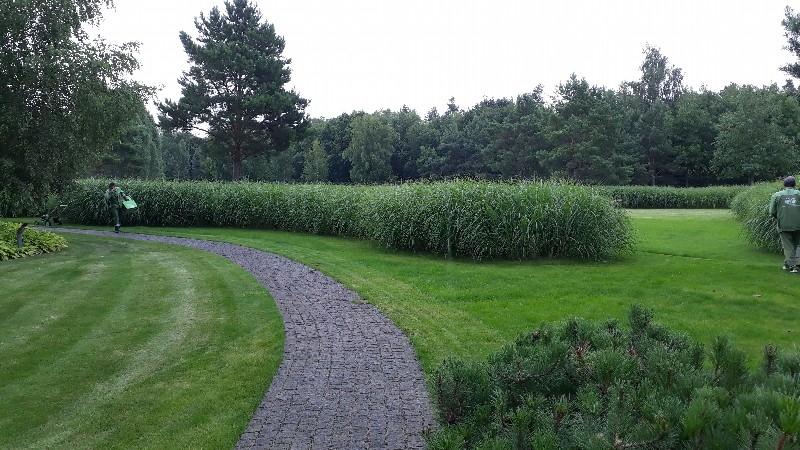 большой участок жуковка газон сосны ковровые посадки из сосны горной цветники хоста гранитная брусчатка