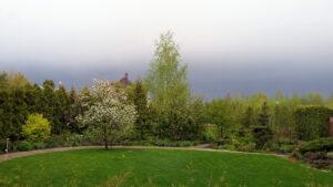 декоративная яблоня рулонный газон изгородь из туи брабант