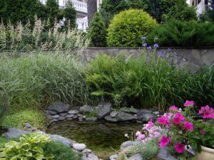 голден глоб коника папаратник маленький пруд растения у водоема райграсс бульбоносный гвоздика перистая ирис очиток ложный розеум хоста сибирский подпорная стенка