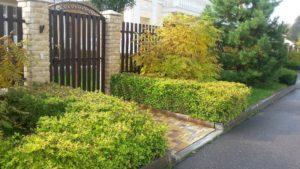 калитка спирея японская рябинник сосна обыкновенная забор пестово