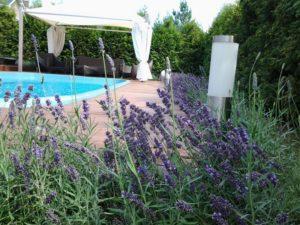 лаванда шатер беседка бассейн садовая мебель живая изгородь из туи