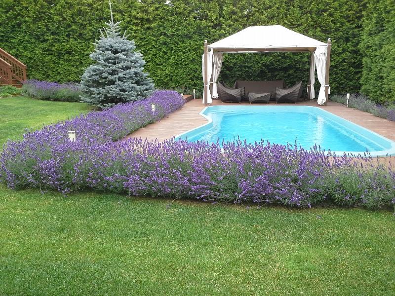 лаванда шатер беседка бассейн садовая мебель живая изгородь из туи ель колючая голубая газон новые вешки