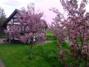 лешково озеленение яблоня декоративная роялти обслуживание участка