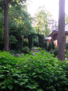 лесной средний участок гортензия липа арка из туи нагорье