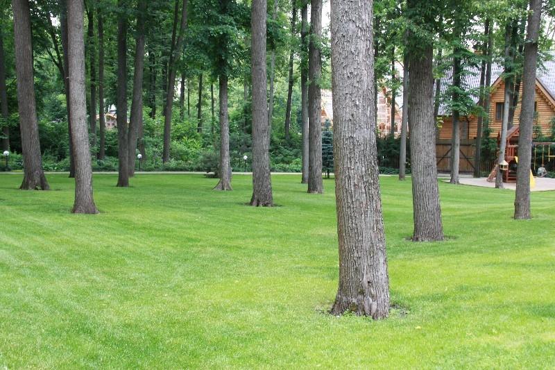 лесной участок липы газон деревянный дом садовые светильники нагорье