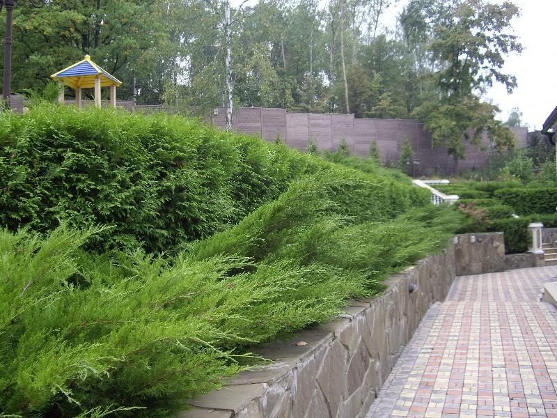 лесной участок на склоне лестница тротуарная плитка подпорная стенка песчанник ростовскийживая изгородь из туи можжевельник новогорск 2