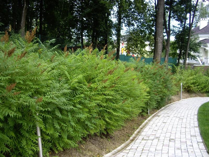 лесной участок на склоне тротуарная плитка рябинник живая изгородь светильник садовый новогорск 2