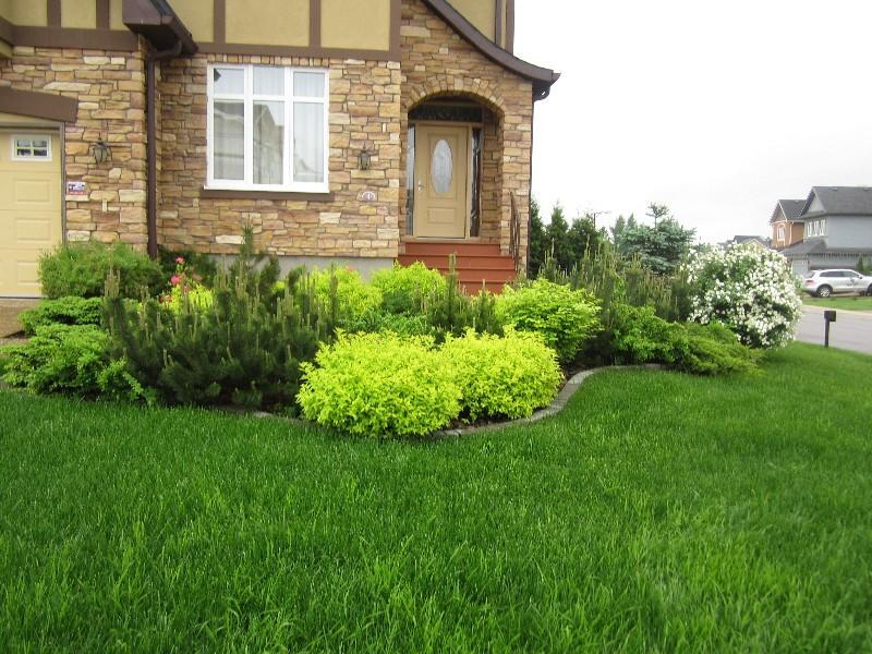 маленький участок новые вешки газон сосна горная можжевельник спирея голд флейм