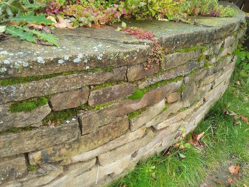подпорная стенка растовский известняк сухая кладка мох старый камень почвопокровные растения чистые ключи
