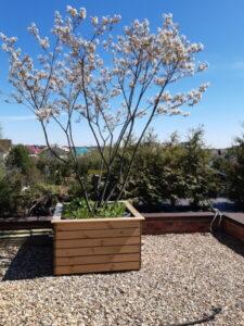 Сад на крыше ирга зонтик озеленение кровли контейнерное озеленение