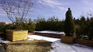 Сад на крыше ирга зонтик озеленение кровли контейнерное озеленение изгородь из туи