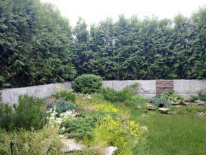 Сад на крыше озеленение кровли контейнерное озеленение астильба петуния туя западная брабант живая изгородь горка на крыше