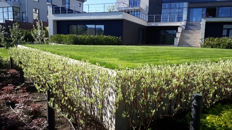 современный сад дерен пестролистный газон капельный полив живая изгородь из туи подпорные стенки из бетона садовые светильники лиственница японская пестово