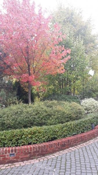 Средний лесной участок клен красный спирея серая грефшайм кизильник блестящий дерен белый сибирика подпорная стенка кирпич ручной формовки липа гранит