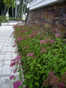 средний лесной участок осень новогорск 2 баня тротуарная плитка парковка спирея японская