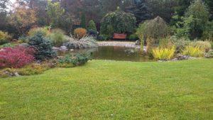 средний участок газон пруд околоводные растения вяз плакучая форма