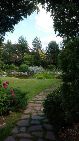 средний участок лето водоем сосна обыкновенная околоводные растения