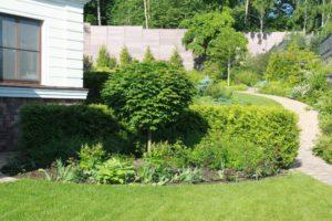 Средний участок новогорск 2 живая изгородь из туи плитка тротуарная клен глобозум цветник сложный рельеф