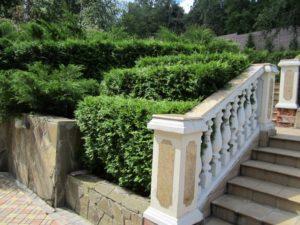 Средний участок новогорск 2 живая изгородь из туи плитка тротуарная лестница подпорная стенка ростовский плитняк сложный рельеф