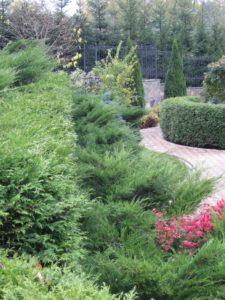 Средний участок новогорск 2 живая изгородь из туи плитка тротуарная можжевельник осень