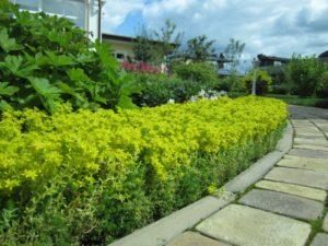 средний участок очиток едкий цветет герань тротуарная плитка пестово