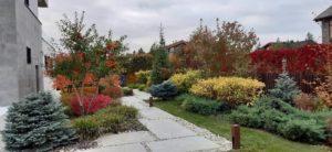 средний участок современный сад дорожка из бетонных плит светильники садовые газон пестово ель глаука глобоза ирга канадская можжевельник галька морская