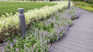 средний участок современный сад дорожка из дпк светильники садовые живая изгородь из дерен пестролистный газон подпорная стенка из бетона пестово